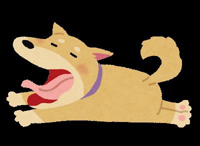 【画像】世界一鼻の長い犬が発見されてしまうwwwwwwww