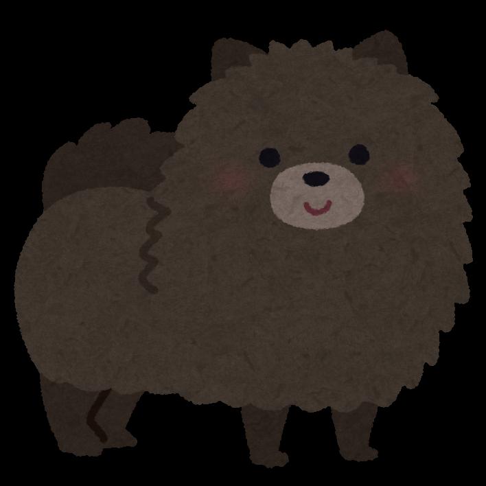 【衝撃】甲斐犬とコーギーのミックス犬、クマにしか見えなくてワロタwwwwwwww