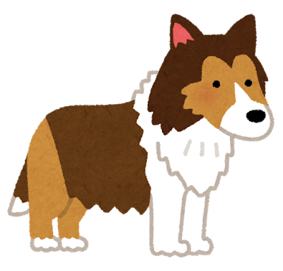 dog_shetland_sheepdog.png