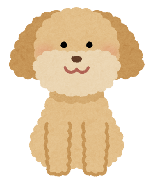 dog_toypoodle_cream.png