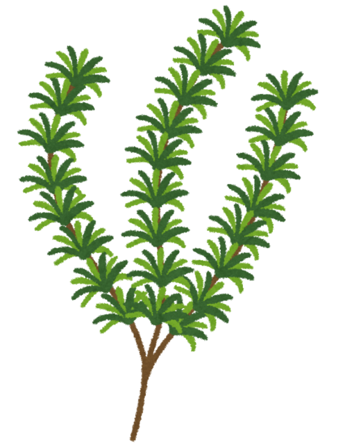 herb_rosemary.png