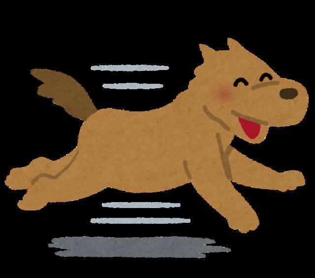 run_dog_smile.png